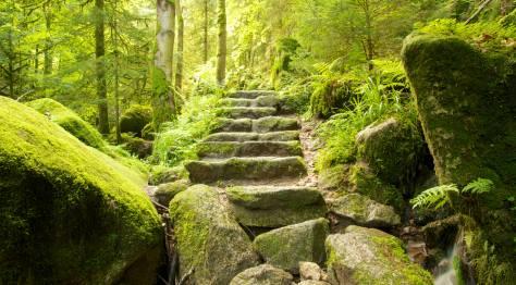 Black Forest Stairway