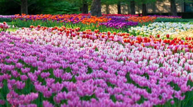 Coming into Bloom: Why The Netherlands is The Flower Capital of the ...