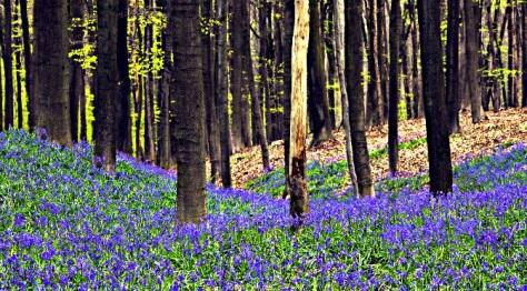 Woodland Belgium