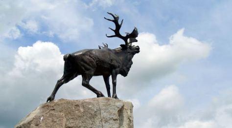 Newfoundland Memorial Park Caribou