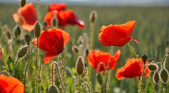 First World War Battlefield Tours: The Best Routes
