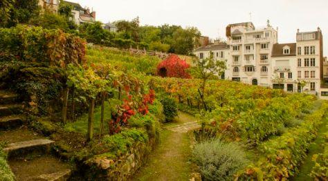 Secret Paris Vineyard in Montmartre