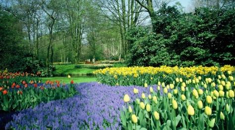 Tulips in the Keukenhof gardens